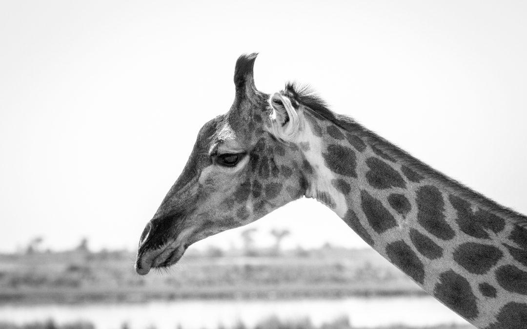 Chobe Day Trip- A Photo Journal