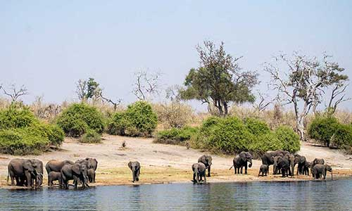 Things to Do in Chobe, Botswana