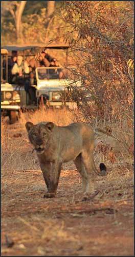 Meet our People, Guide at Imbabala Zambezi Safari Lodge- Stanislous Chizipi