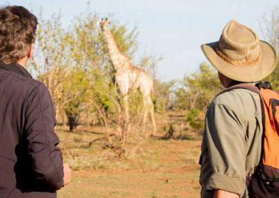 Waking Safari - Get up close