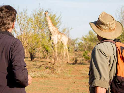 Wildlife Conservation & Awareness Safari