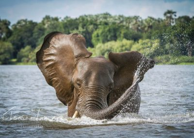 Elephant Cooling in River