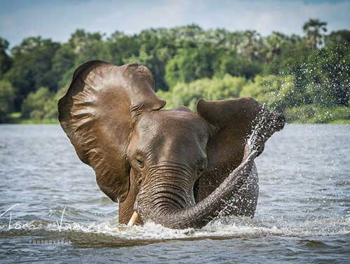 Chobe Day Trip from Livingstone, Zambia