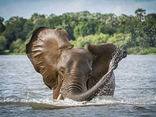 Chobe Day Trip from Livingstone, Zambia