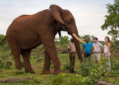 slider1-elephant-encounters