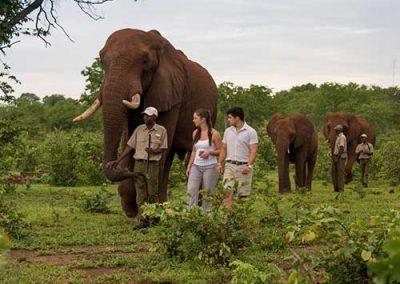 slider2-elephant-encounters