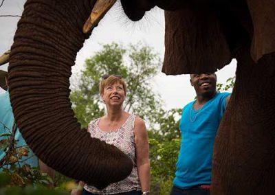 vic-falls-meet-elephants