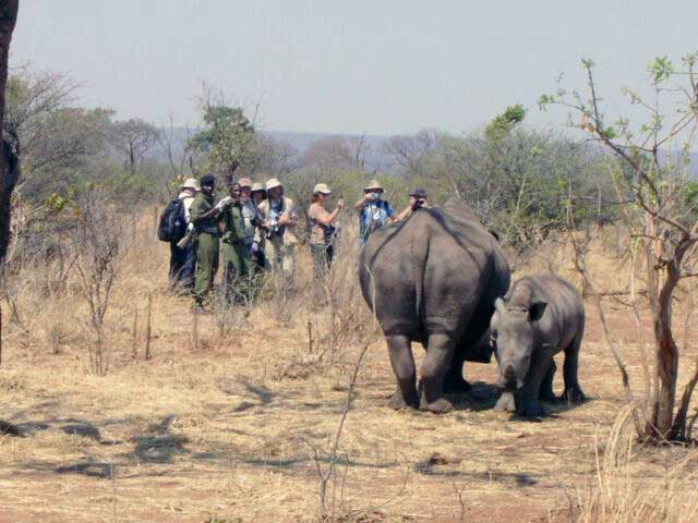 Rhino-Walk-Group