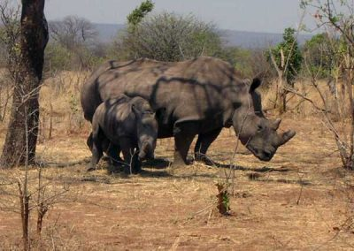 Rhino-Walking-Safari