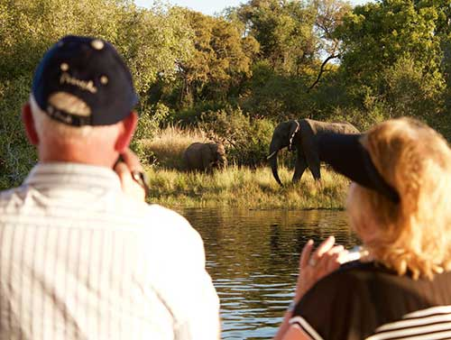 zambezi_royal_elephants
