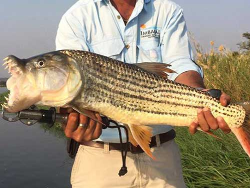 vic-falls-fishing