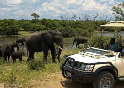Victoria Falls Chobe Day Trip