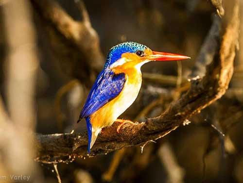 canoeing-bird-watching