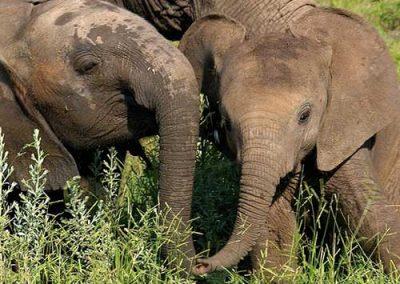 elephants-playing