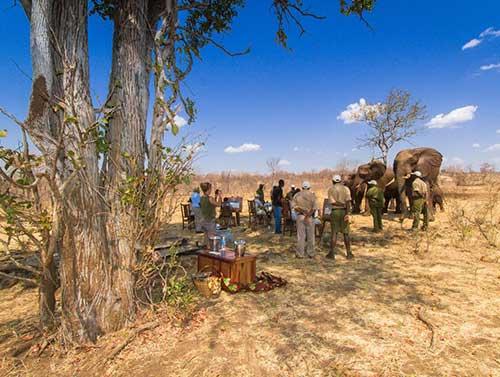 slider-elephant-art-safari