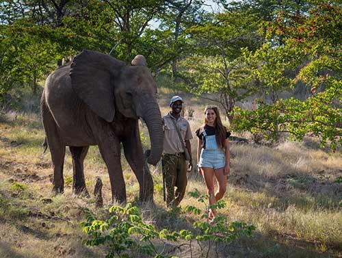 slider-elephant-encounters