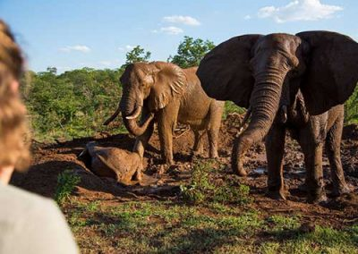 vic-falls-elephant-encounters
