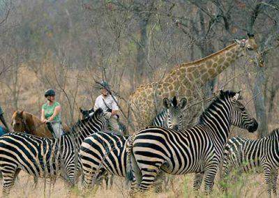 zambia-horse-back-safari