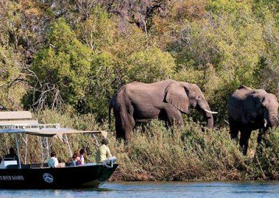 zambia-river-safari-elephants