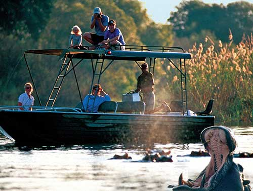 Viewing hippos on a River Safari