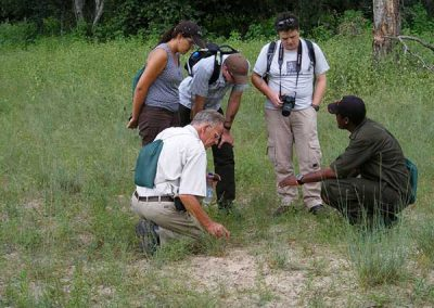 Searching for the big five on safari