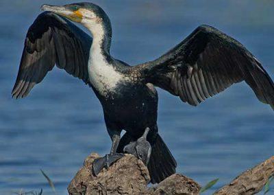 The Zambezi River is a birdwatcher's paradise
