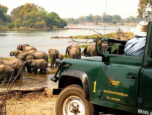 Elephants drinking on the banks of the Zambezi