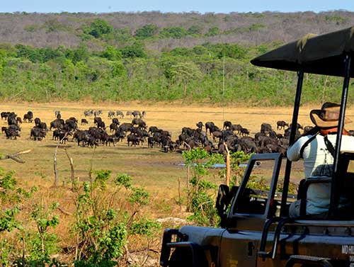 A special sighting on safari in the Zambezi National Park