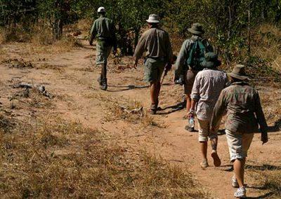 wild-horizons-walking-safari