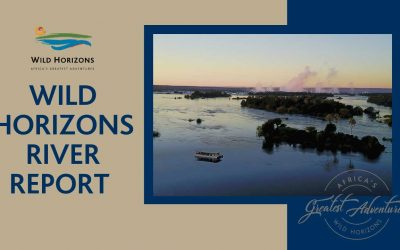 Zambezi River Report January 2020