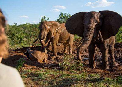 Wild Horizons - Activities view elephants