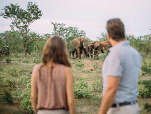 Wild Horizons elephant encounter